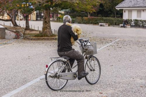 pan z psem na rowerze