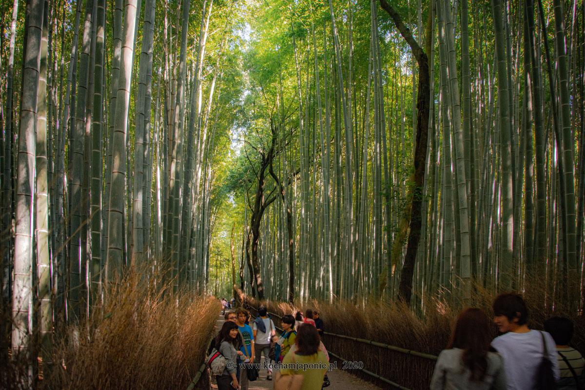 Las bambusowy Arashiyama